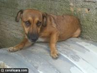 Cachorros procuram novos lares no PV