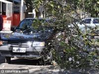 Árvore cai em carro na Marcos Rovaris