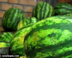 Frutas, verduras e legumes fresquinhos
