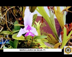 Olhares de estudantes sobre a natureza formam exposição fotográfica
